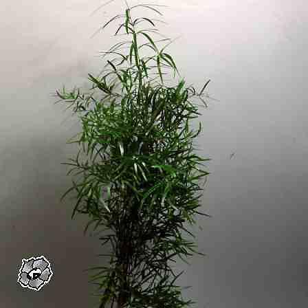 Комнатные растения черные букашки на